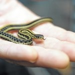 Zoo able to save snake with cancer