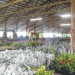Plant sale helps gardeners