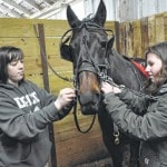 DACC students care for horses during equine-science course