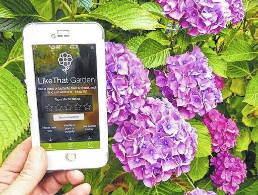 """A gardener in Langley, Wash., is shown holding a mobile phone with app called """"Like That Garden,"""" which is one of the many entries in the expanding field of apps designed to instantly identify unknown plants or butterflies from a photo taken by the phone camera."""