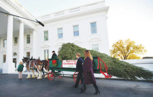 First Lady and son receive White House Christmas tree
