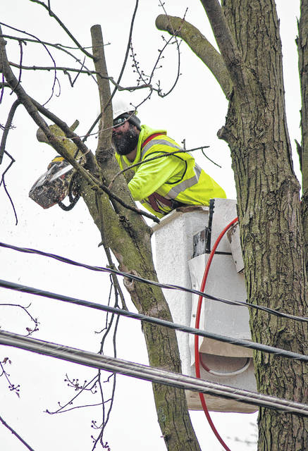 """""""Look out below"""" was heard several times Wednesday as preparation of the East William Street widening project began with the cutting down of trees. Crews began to remove trees along the heavily used route Monday, while flaggers kept traffic delays at a minimum."""