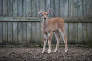 Columbus Zoo, The Wilds celebrate first animal births of 2018