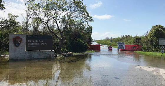 Flooding has closed many areas of Everglades National Park. John Adornato/NPCA