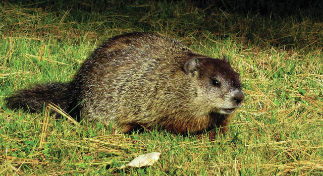There will be a Groundhog Hike at Wingfoot Lake State Park on Feb. 3.