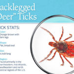 Tips for a tick-free summer